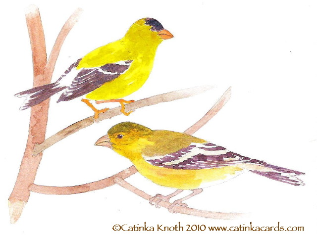 goldfinches art by Catinka Knoth