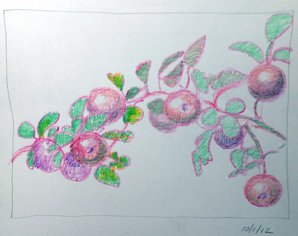 Apple Bough Crayon drawing by Catinka Knoth