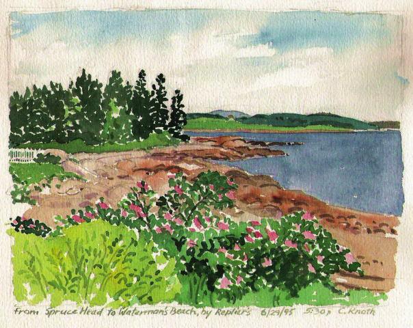 coastal maine florals scenes - beach roses