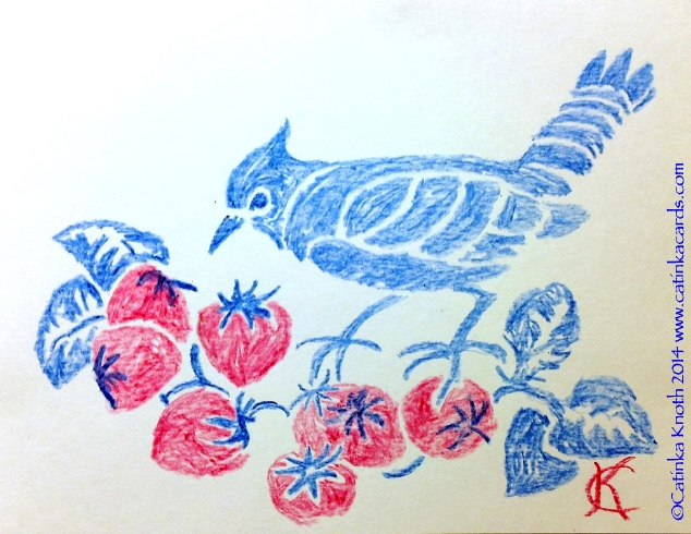 bluejay and strawberries, red white and blue crayon drawing, 2013 Catinka Knoth