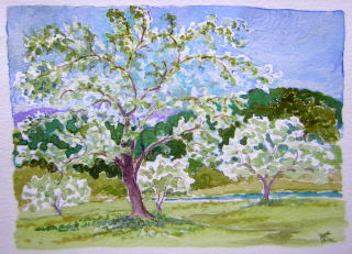 apple trees landscape