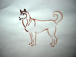 husky line drawing