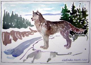 husky wolf dog watercolor
