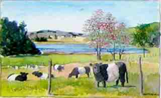 belted galloways painting
